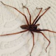 Natural Methods To Fight Against Spiders In The House