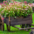 Garden and Landscaping For Beginners