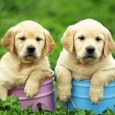 What To Buy For Your Pet?