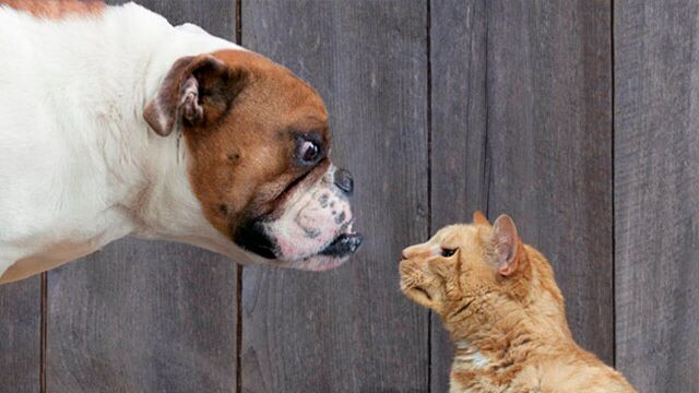 Why Dogs Are Better Pets Than Cats