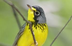 The Importance Of Saving Bird Habitats – Some General Information For Public