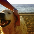 Dog Paralysis Tick Effects On Humans That You Should Know